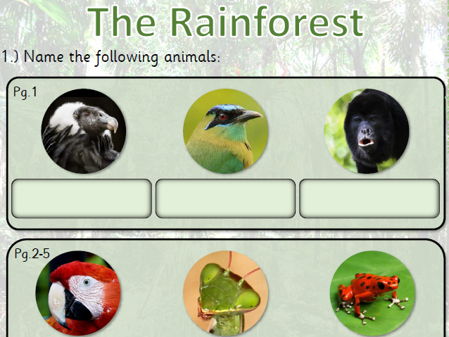 Amazon Rainforest Internet Research - Animals KS1