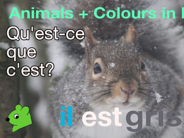 Animals + Colours in French