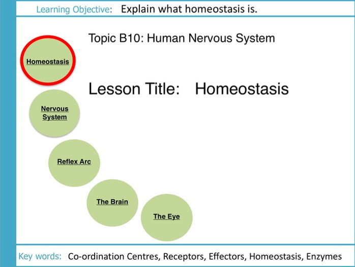 AQA GCSE: B10: The Human Nervous System: L1 Homeostasis