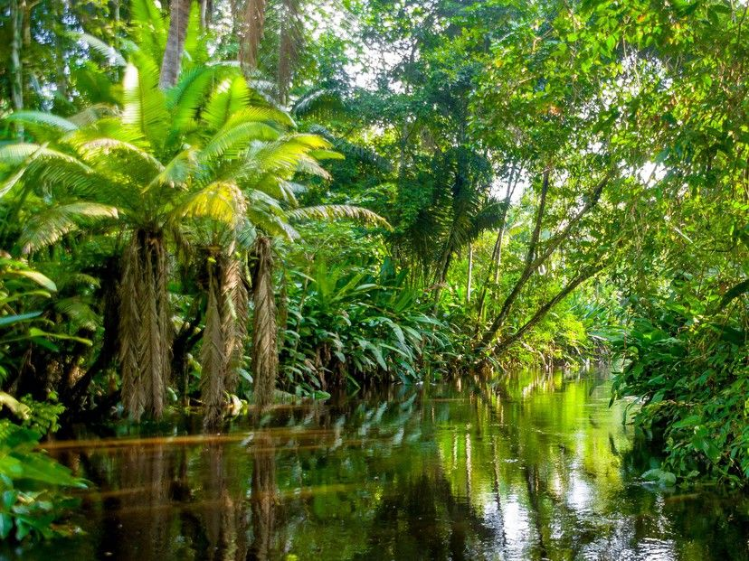 Listening Quiz: ESL Podcasts on Brazil and the Amazon Rainforest by