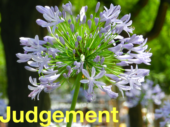 Judgement: Primary Mindfulness and Wellbeing through real stories.