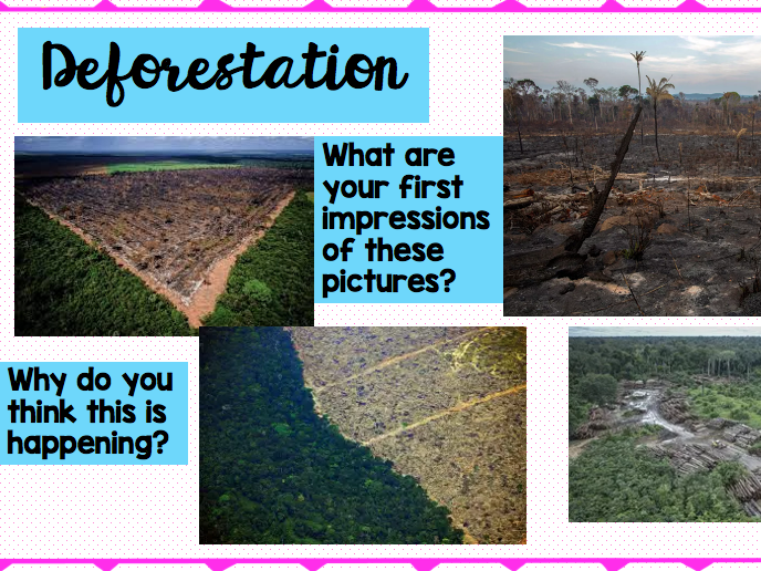 Deforestation Lesson Pack KS2