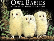 EYFS Medium term plan for Owl Babies/Nocturnal animals.
