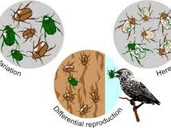 Natural Selection [NEW SPEC AQA]