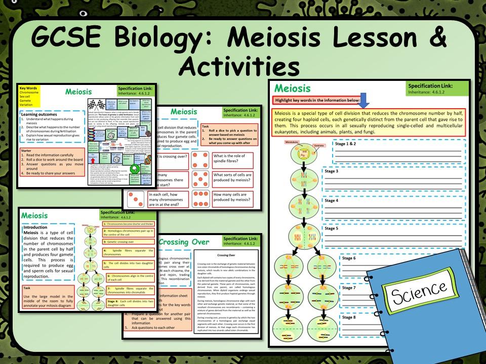 AQA KS4 GCSE Biology (Science) Meiosis Lesson & Activities