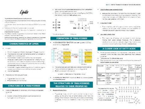Lipids Summary Sheet (AQA Biology A-Level)