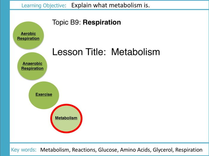 AQA GCSE: B9 Respiration: L4 Metabolism