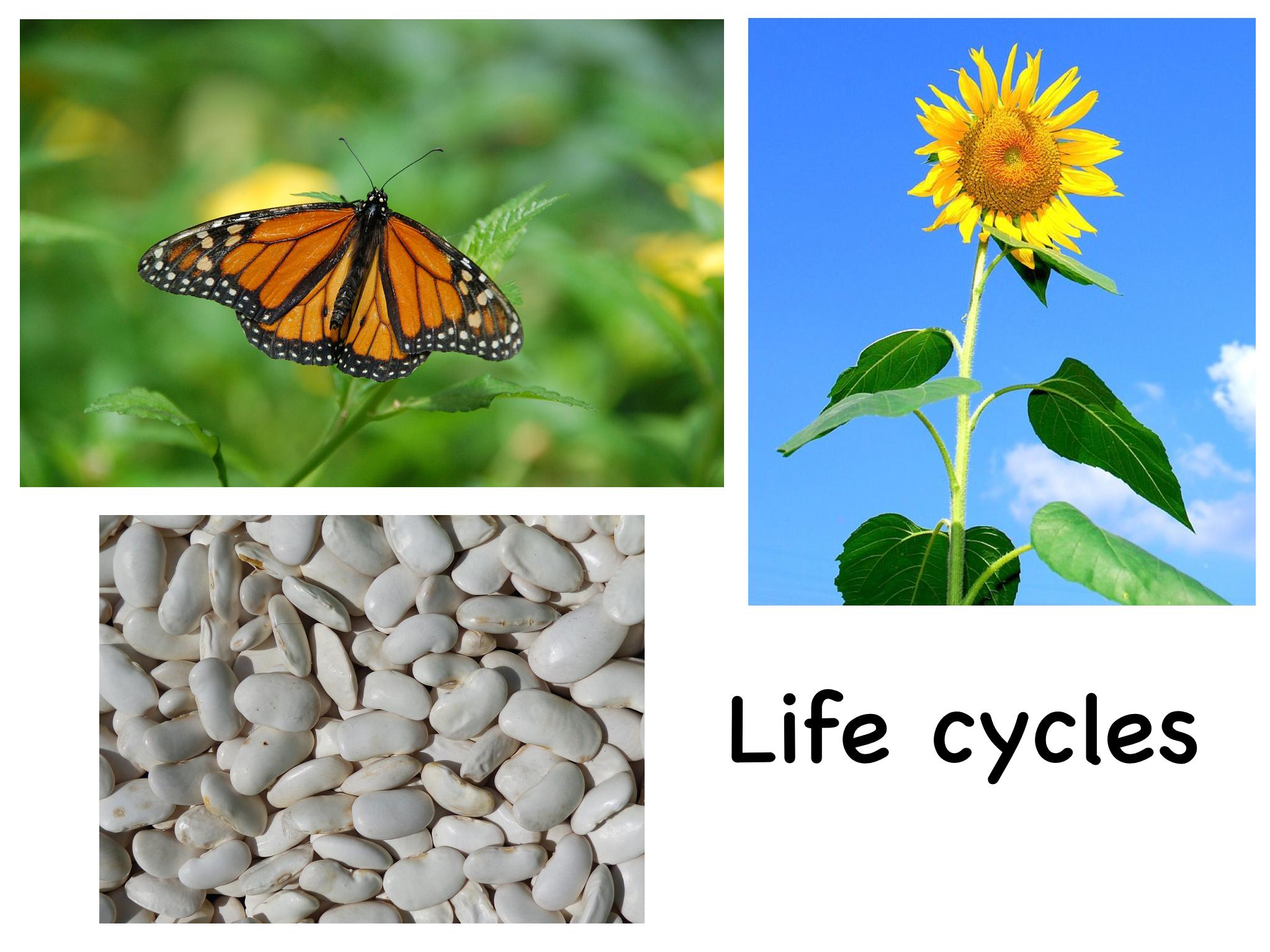 Life Cycles Bundle