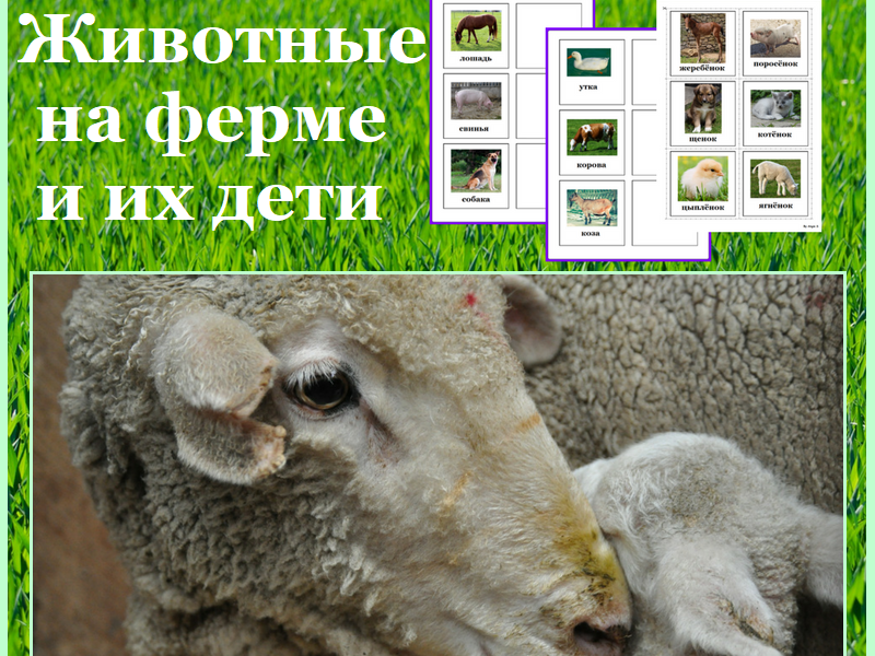 Russian Farm Animals and Their Babies Matching Activity - Животные и их дети