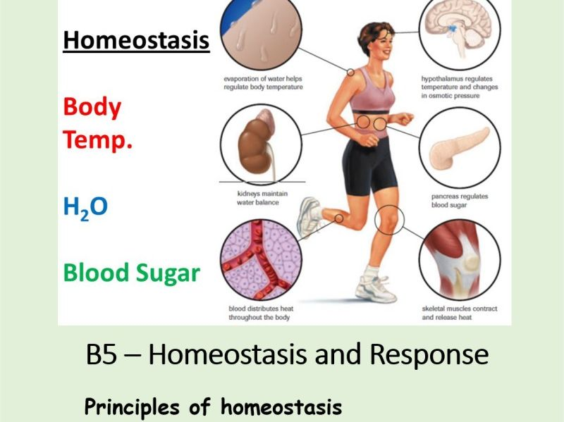NEW AQA BIOLOGY GCSE - HOMEOSTASIS and RESPONSE - Lesson 1 – Principles of homeostasis