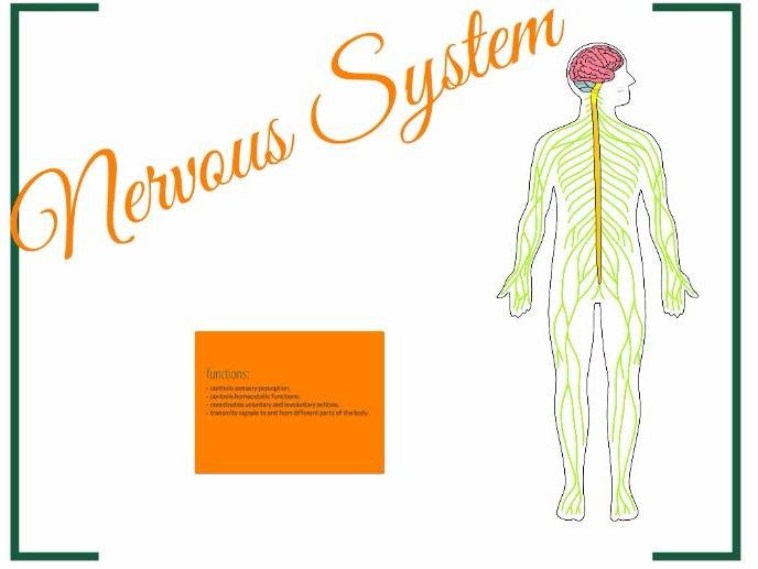 Nervous System Prezi
