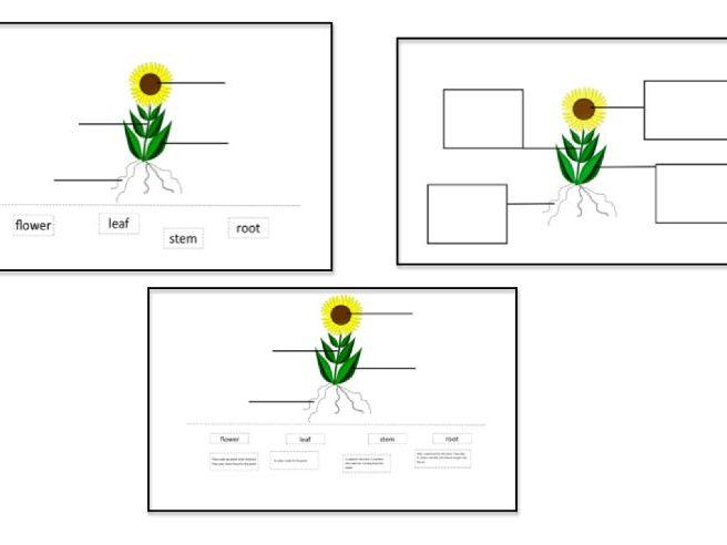 Plants- Labelling a plant- KS1 Science