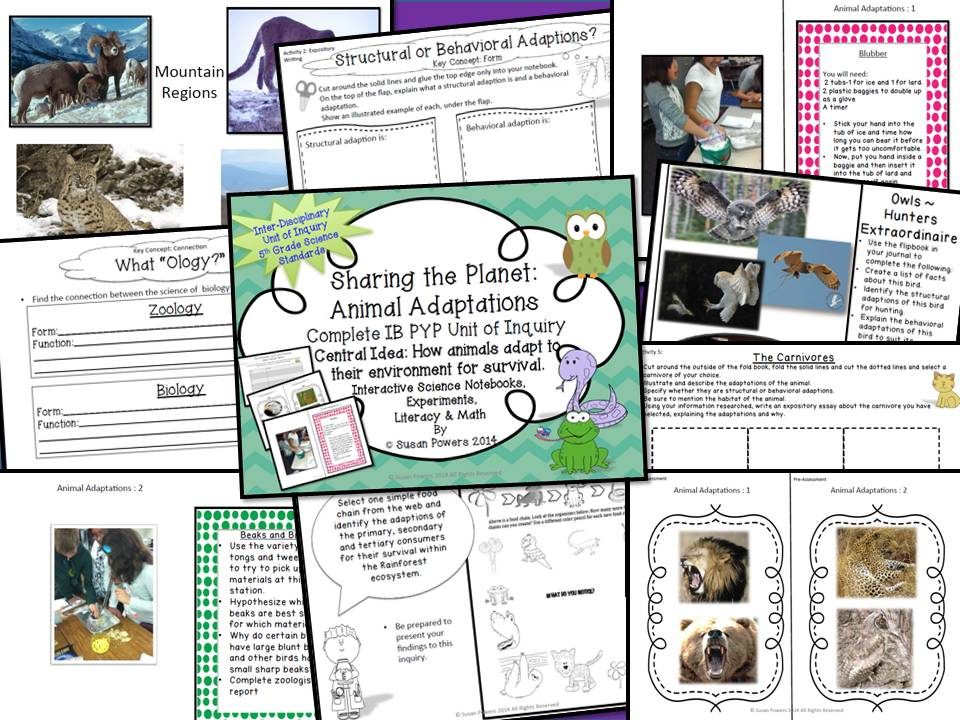 An IB PYP Science Inquiry Into Animal Adaptations