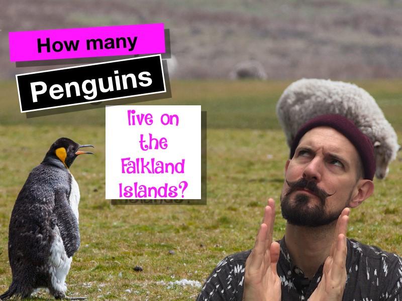 How many penguins live on the Falkland Islands?