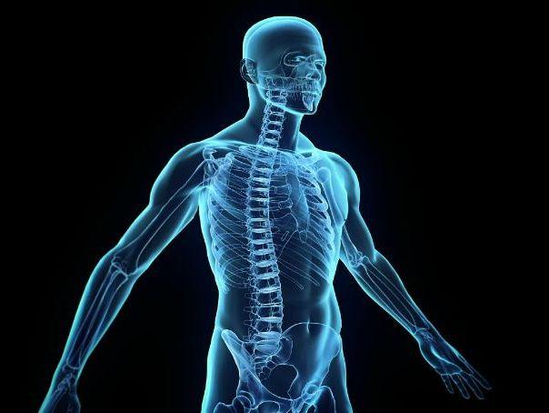 The Human Body KS3 Unit