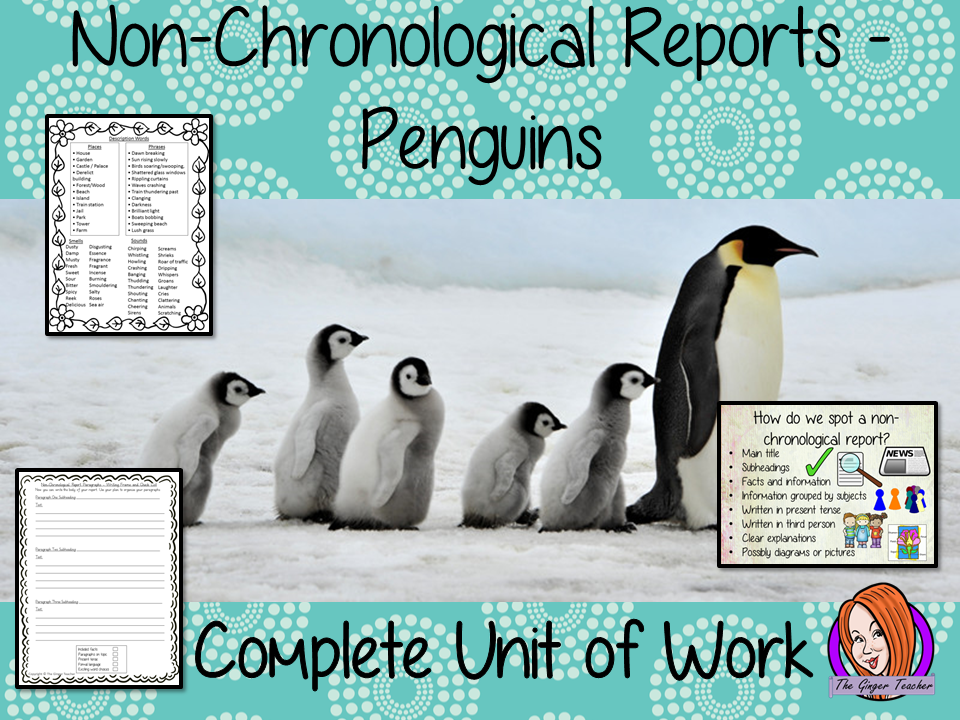 Penguins Non-Chronological Reports   -  Complete Unit of Work STEAM Lesson