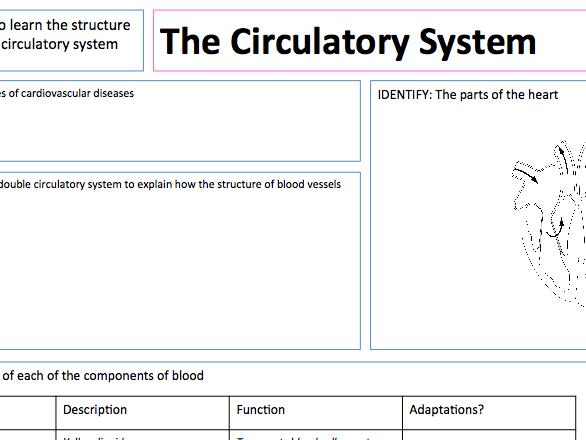 Circulatory System - Presentation, A3 Lesson Map