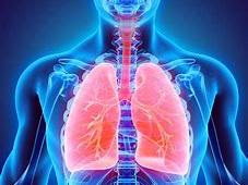 SEND Y7 Respiratory System