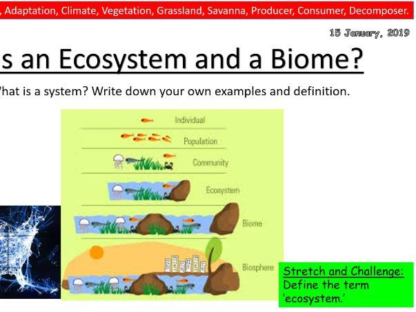 Geography Lesson- What is an ecosystem?