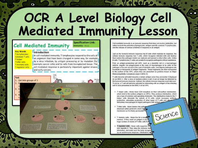 OCR A Level Biology Cell Mediated Immunity Lesson
