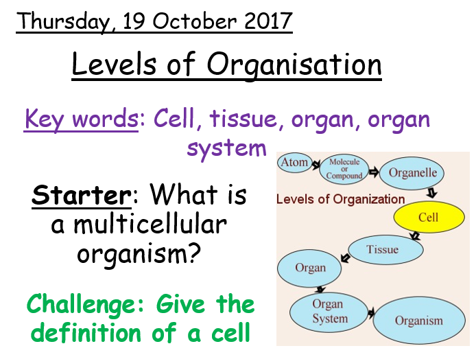 Levels of Organisation - Year 7