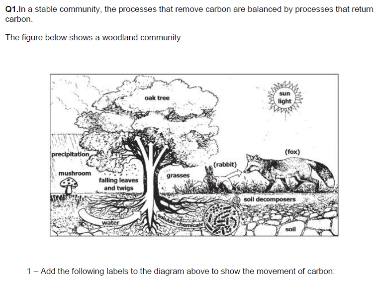 Carbon cycle, ecosystem scaffolded 6 mark scientific literacy question easy deep mark