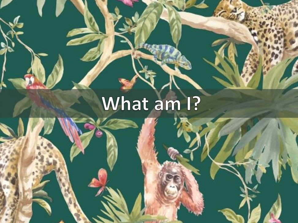 What am I? Interactive animal description game
