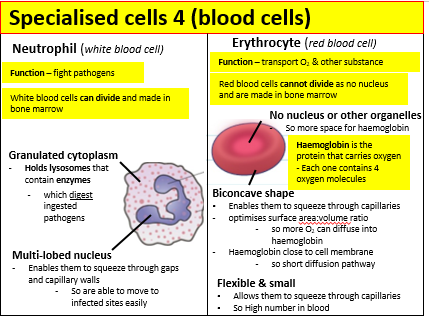 Applied science unit 1 biology revision cards