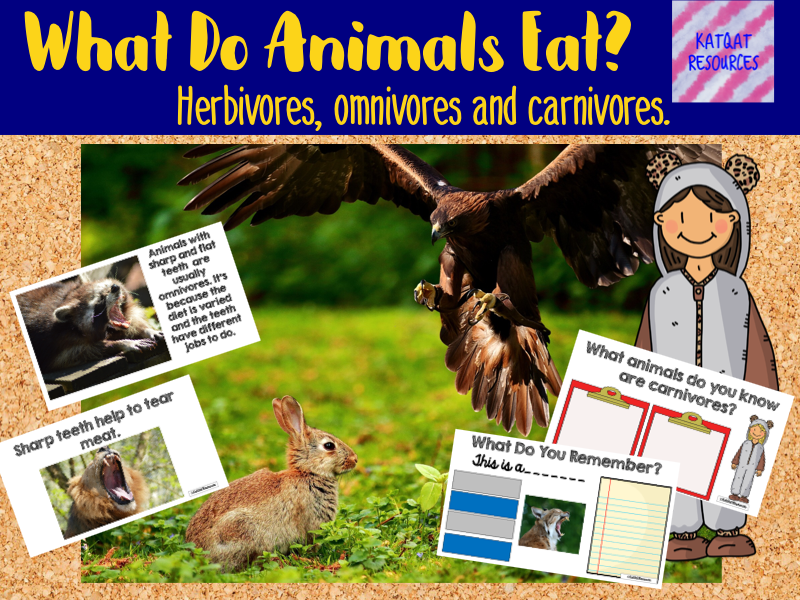 What Do Animals Eat? Herbivores, Omivores and carnivores.