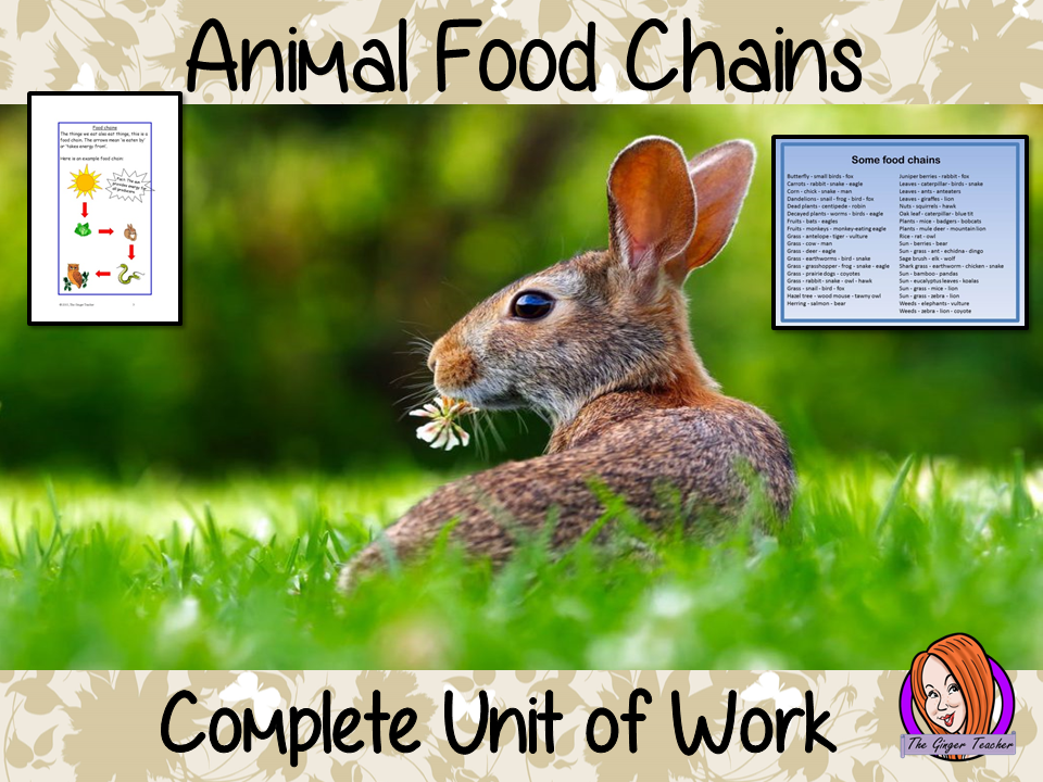Complete Science STEAM Unit - Food Chains