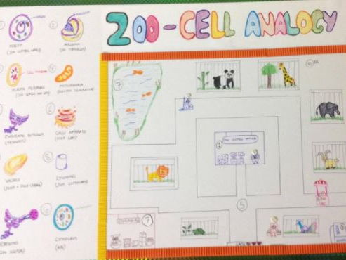 cell analogy ideas