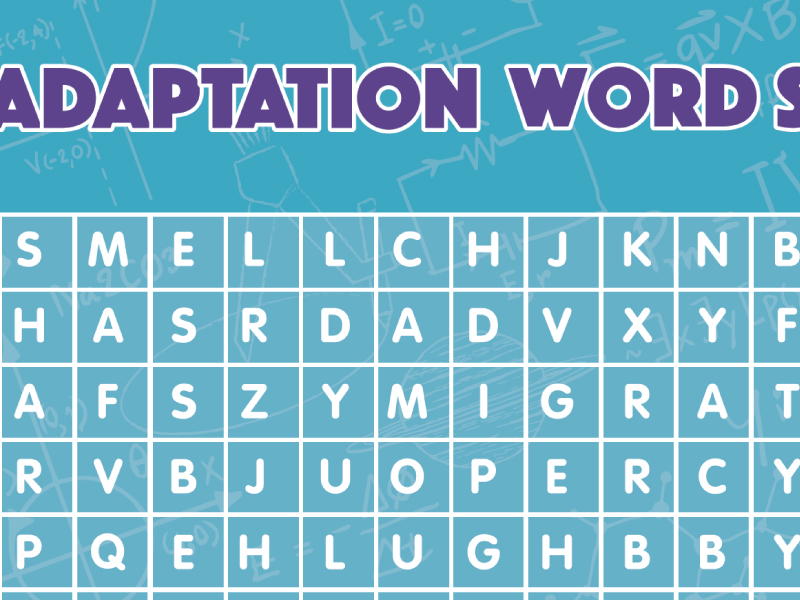 Adaptation word search