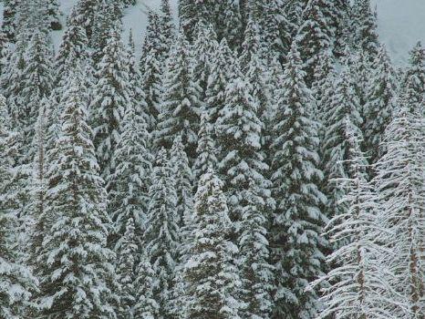 Winter Wonderland- Joseph T. Renaldi