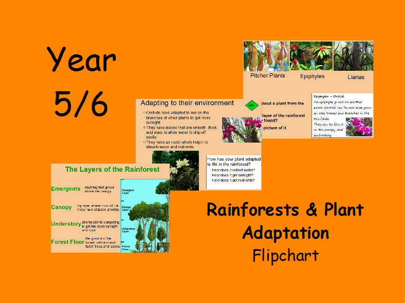 Rainforest, Plant Adaptation Flipchart