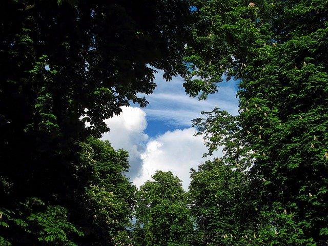 Haiku frames - Trees