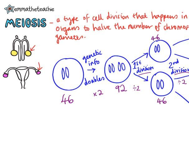 MEIOSIS Revision Video GCSE 9-1 Bio & Combined Science - AQA