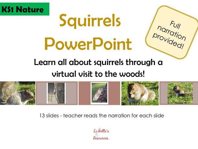 Squirrels PowerPoint KS1