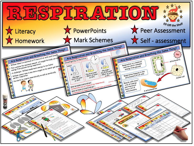 Respiration Explained KS3- Fully Resourced Lesson