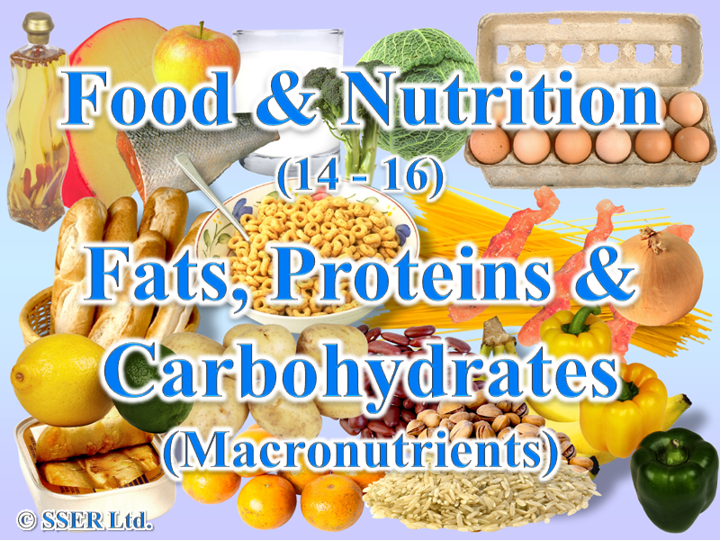 1.1 Fats, Proteins & Carbohydrates