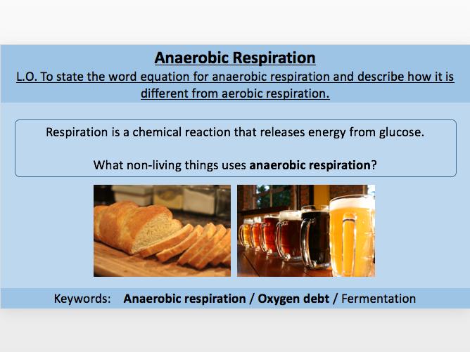 Anaerobic Respiration / Oxygen Debt / Fermentation