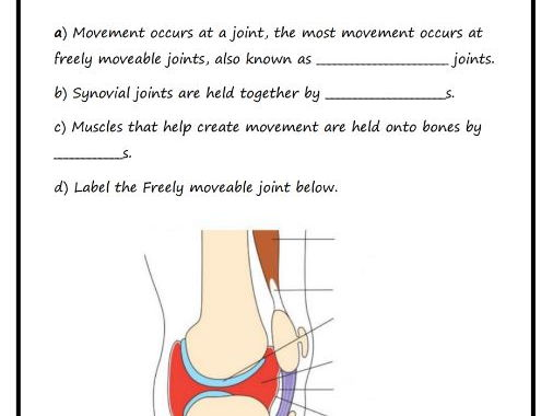 Muscular System Diagrams Study Label Quiz Color By