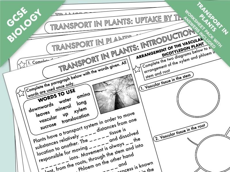 GCSE Biology Worksheet Pack on Transport in Plants: Transpiration