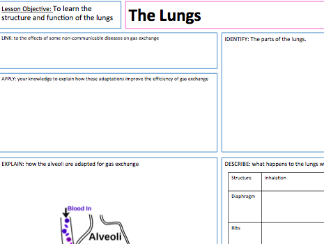 The Lungs - Lesson Presentation, A3 Lesson Map