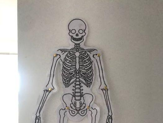 Bones of the Body - Movable Skeleton