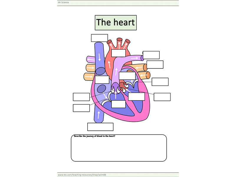Circulation and the heart by missmier teaching resources tes ccuart Choice Image