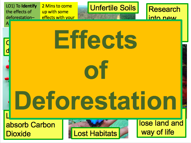 What are the Effects of Deforestation in the Tropical Rainforest? Ecosystems