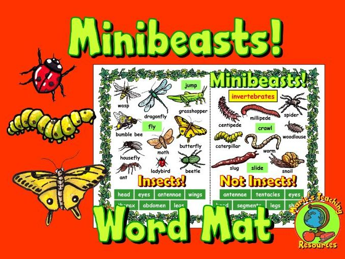 Minibeasts Word Mat