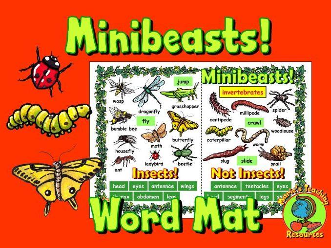 Minibeasts Word Mat