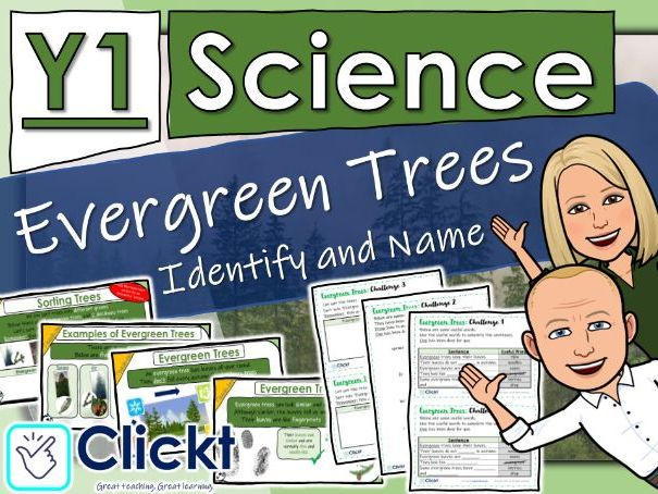 Year 1 Science: Plants: Evergreen Trees - Identify and Name