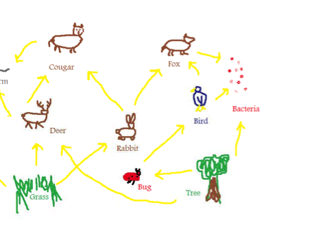 Grade 4/Ecology/Habitats/Food chains and food webs